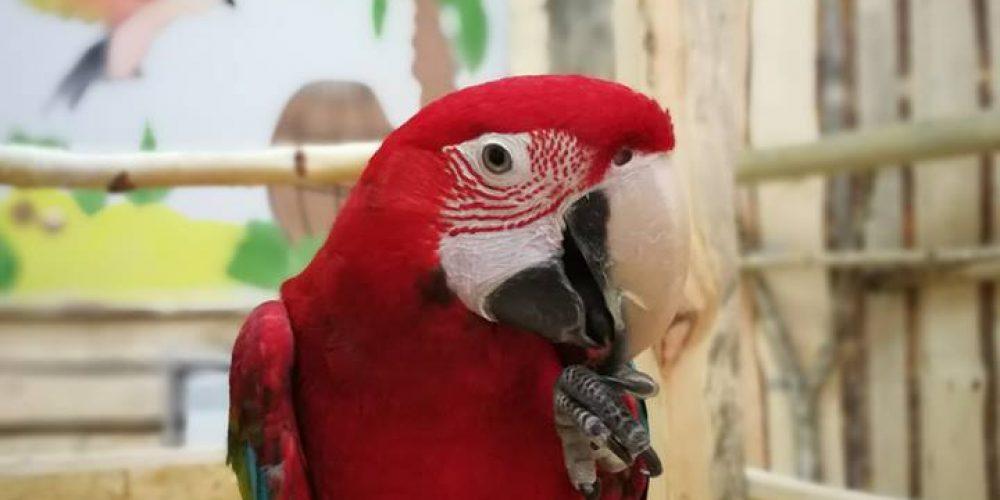 Z wizytą w gorzowskiej Papugarni
